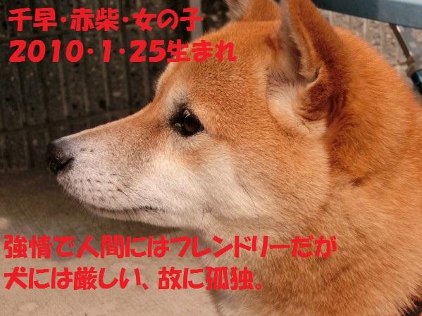 20130811-00003.jpg