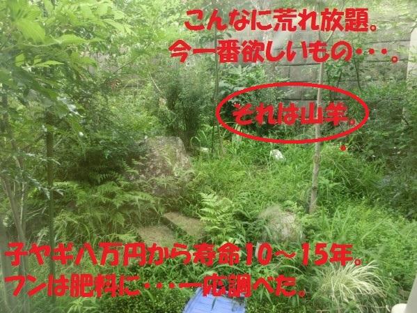 20130819-1.jpg