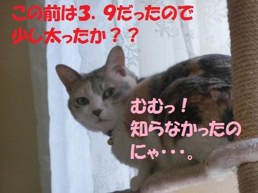 20130902-004.jpg
