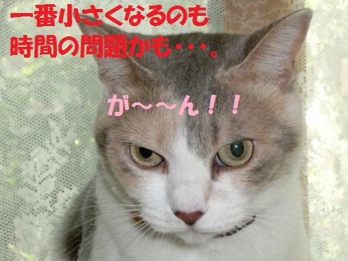 20130902-006.jpg