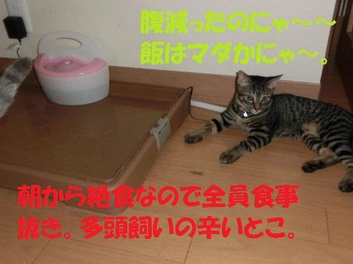20130912-001.jpg