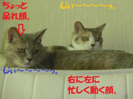 20130928-002.jpg