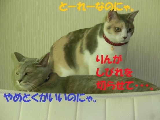 20130928-004.jpg