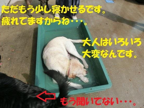 20131011-0007.jpg