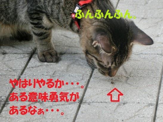 20131130-0008.jpg