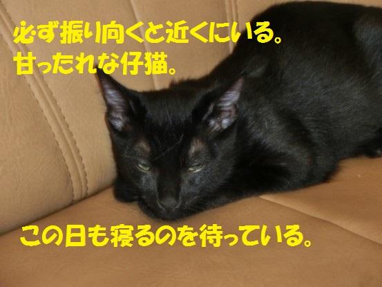 20131231-009.jpg
