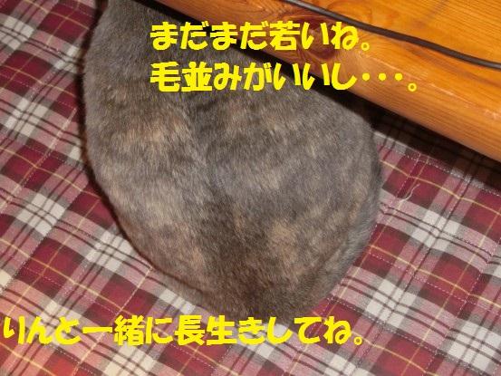 20131231-012.jpg