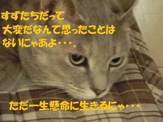 201401-002.jpg