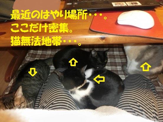 20140103-001.jpg