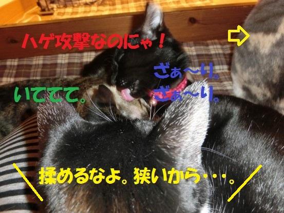 20140103-006.jpg