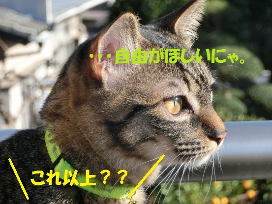 20140110-012.jpg