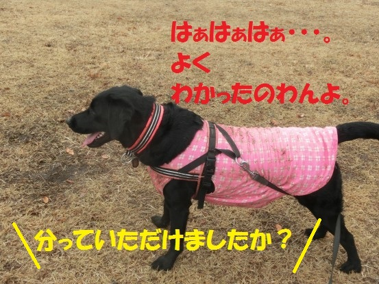 20140111-010.jpg