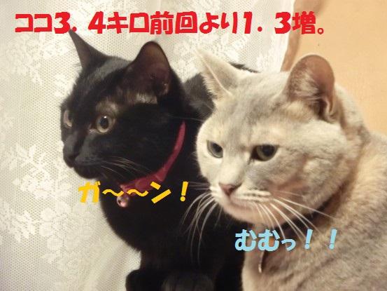 20140124-0001.jpg