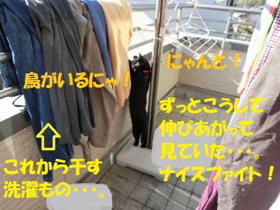 20140130-09.jpg