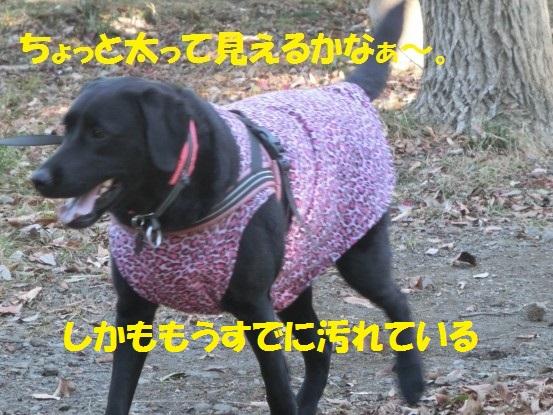 20140131-11.jpg