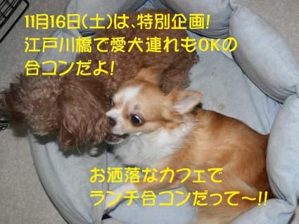 01_20131027165730a0b.jpg