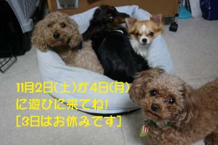 01_201311011345309d6.jpg