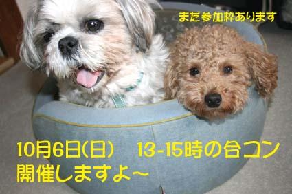 11_201310020859327fd.jpg