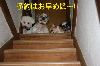 11_201311220422367e5.jpg