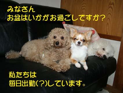 1_20130813183642702.jpg