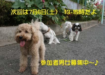2_20130628141249.jpg