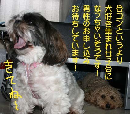 2_20130629181326.jpg