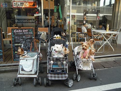 anea café 参宮橋店