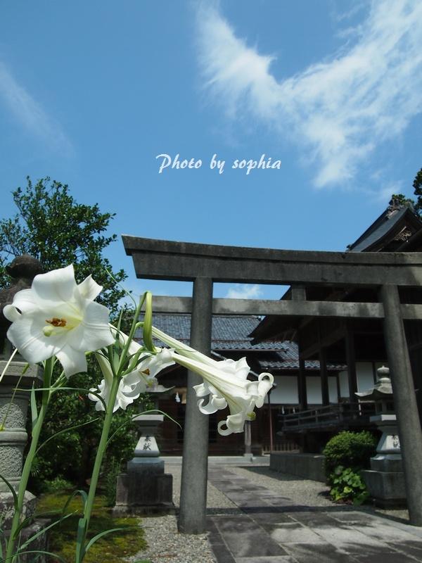 神社とユリの花