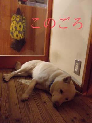 konogoro.jpg