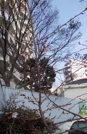 tamasaku-1.jpg