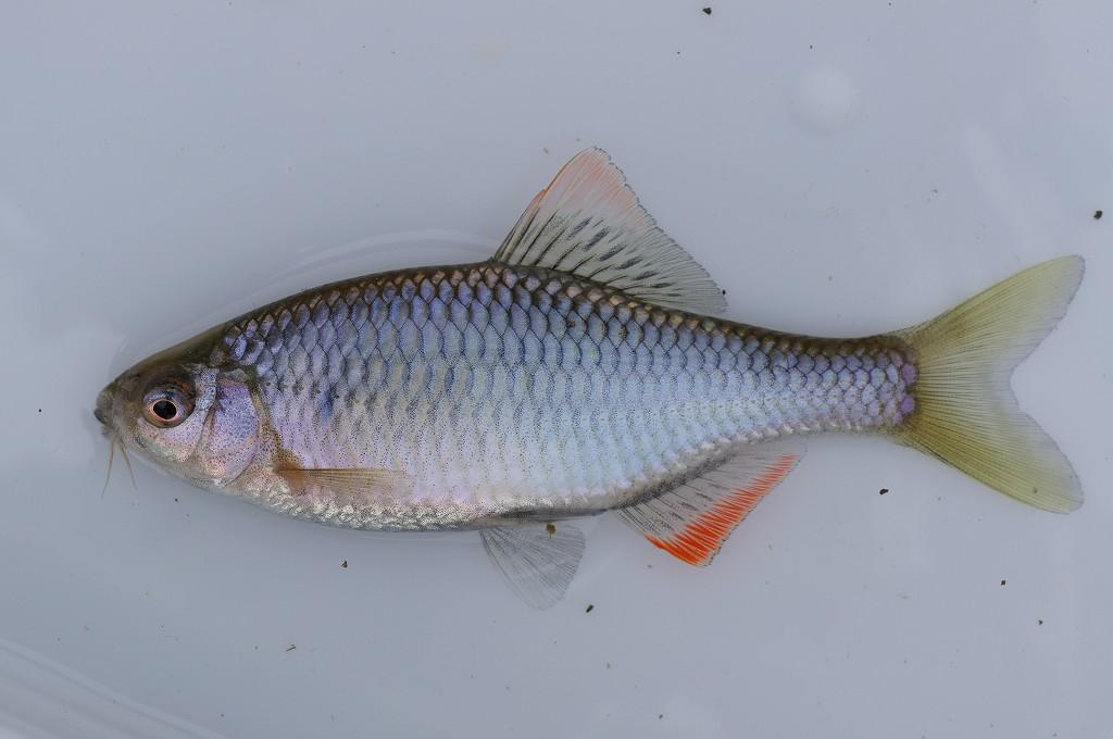趣味はと聞かれれば淡水魚と答え...