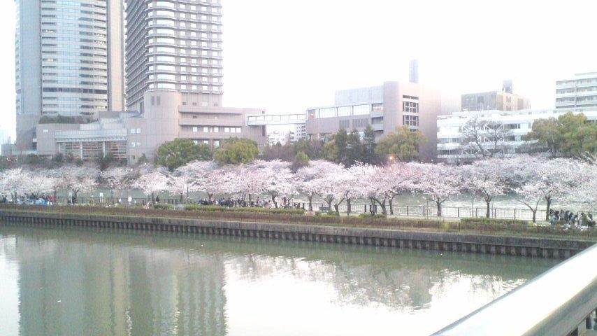 120408大川の桜