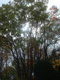2010.11.24五月山03