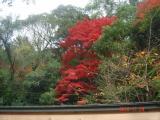 2010.11.24五月山05