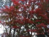 2010.11.24五月山02
