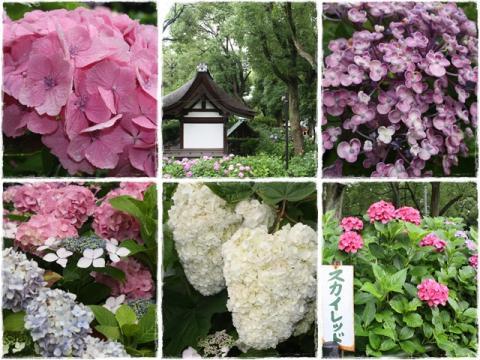 page わんこ抜き京都撮影オフ会2