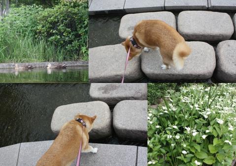 page 日和 鶴見緑地 半夏粧