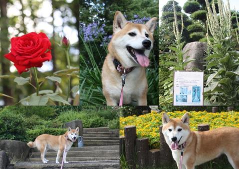 page 日和鶴見緑地 お花の前で2