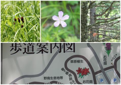 page 日和後泉水自然園4
