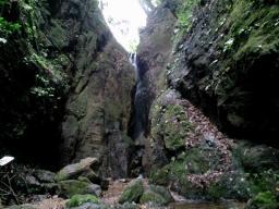 白滝 (8)