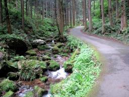 白滝 (6)