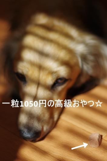 K56_2316.jpg