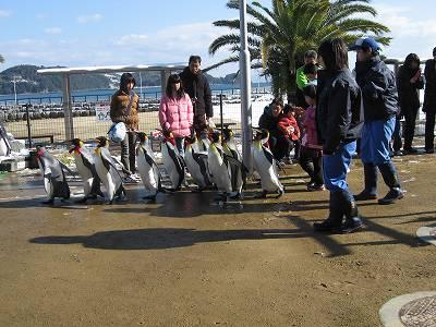 ペンギンパレードの様子1
