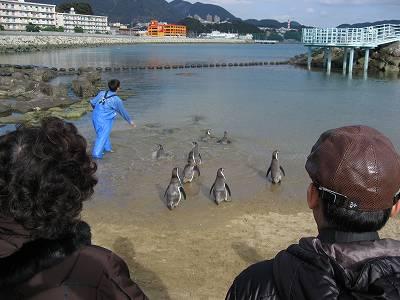 フンボルトペンギンのえさやり2