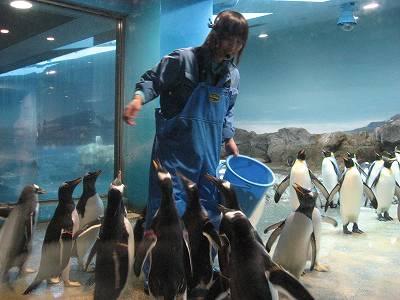 キングペンギンのえさやり