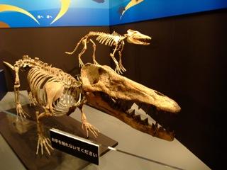 クジラの祖先 パキケトゥス