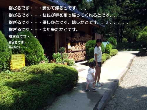 16_11_8.jpg