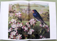 book1_20130203210451.jpg