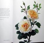 rose1_20100907215349.jpg