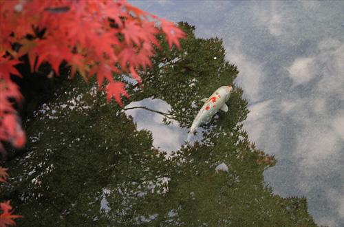 20101121koyo_005.jpg